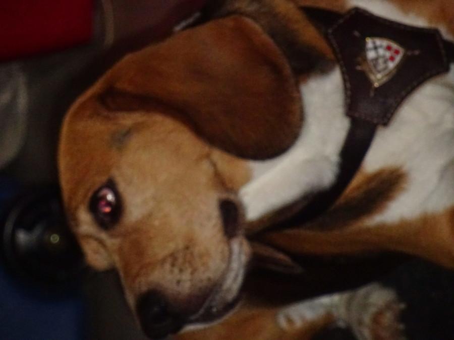 Franz-Joseph, Agentur-Hund