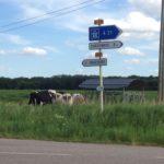 Das Autobahnschild und die Kühe