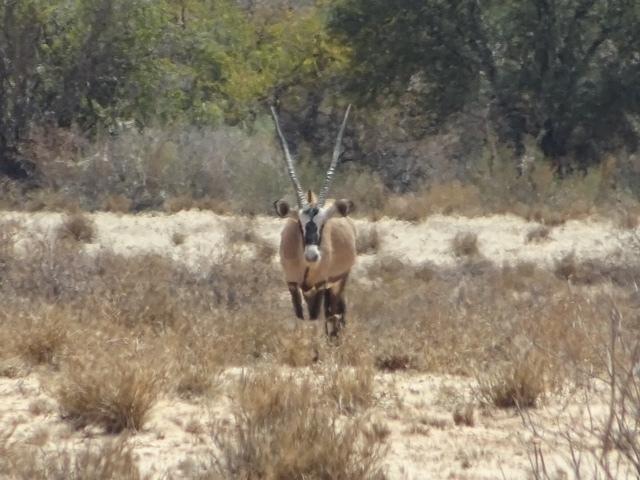 Unser Homie, der Oryx