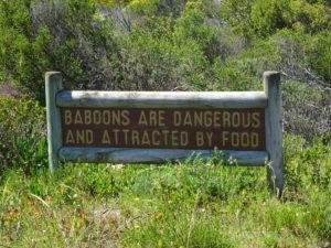 Gefährliche Baboons