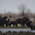 Unzählige Elefanten am Wasserloch