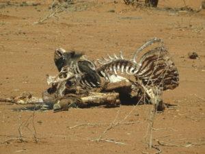 Skelett am Straßenrand