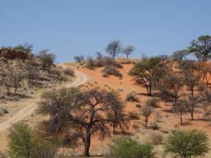 Wüste, Namibia