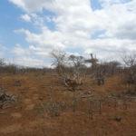 Dürre im Krüger
