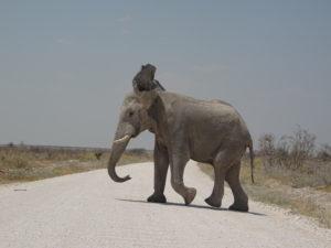 Elefant im Weg
