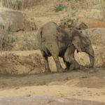Elefantenmama und Baby