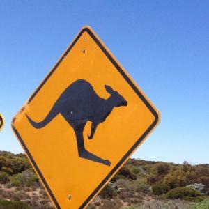 Kängurus in der Steppenlandschaft