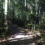 Regenwald um den Lake Eacham