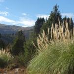 Grüne Landschaft in Argentinien