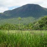 Das feuchte Pantanal