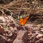 Schmetterlingjagd