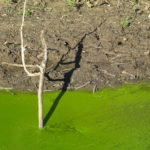Moor im Pantanal