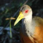 Huebscher Vogel :)