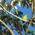 Papageien-Vielfalt im Pantanal, Brasilien