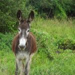 IAIAIA - Esel in Bolivien