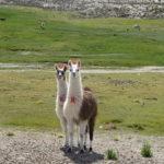Die Supermodels des bolivianischen Hochlands