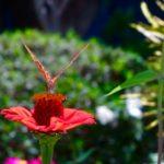 Schmetterling in der Casa