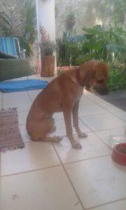 Felipe, der süßeste Hund Abadianias